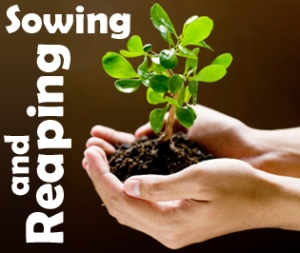 sowing-reaping